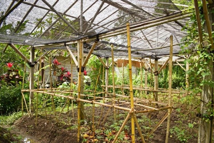 oraganice garden swasti cottages