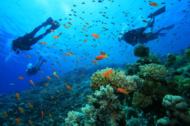 plan-a-scuba-diving-trip.jpg