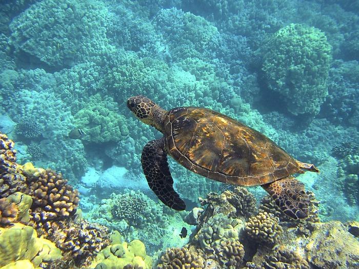 snorkelling gili air.jpg