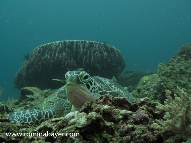 Underwater life 5