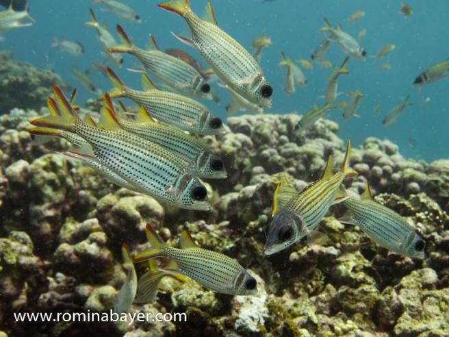 Underwater life 2
