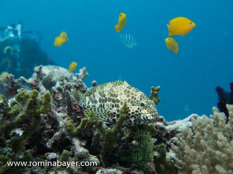 Underwater life 3