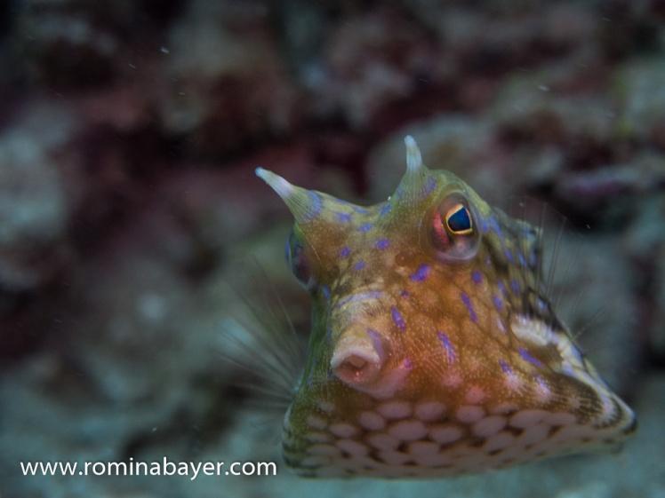 Underwater life 4