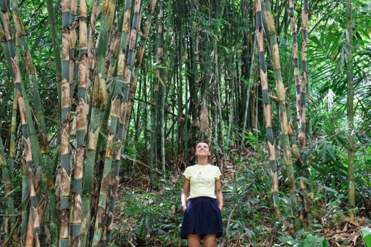 Monkey Forest Tetebatu