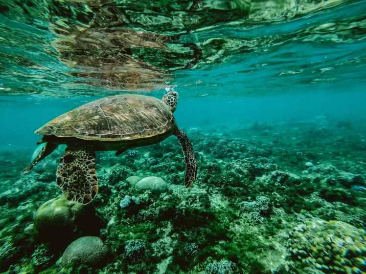 snorkeling in cebu