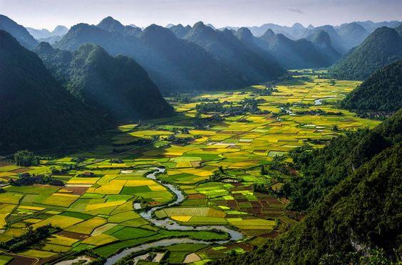 lanuri de orez Vietnam