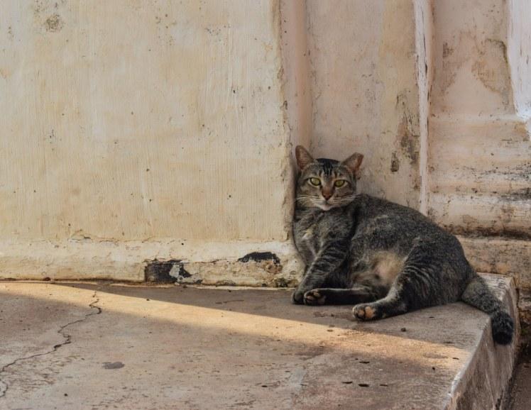 Pisica in Malacca